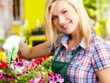 Салат из цветов огурца и фиалки: в Италии пройдет необычный кулинарный фестиваль